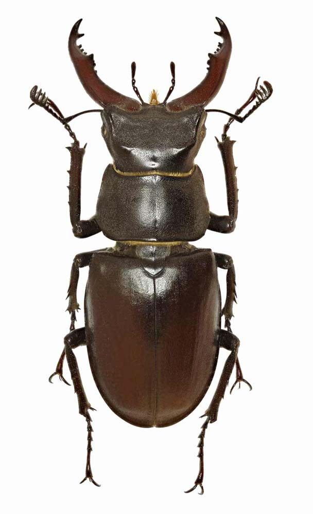 Fun Facts Friday - Insects (Beetles)