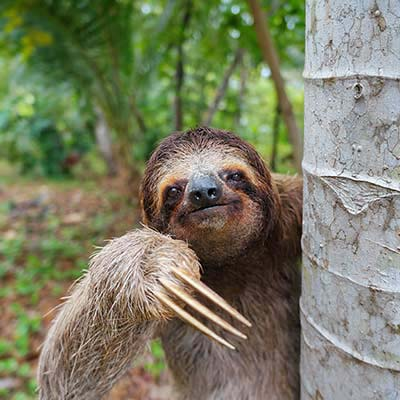 Fun Facts Friday - Sloths